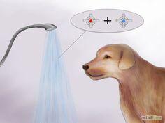 Image titled Bathe a Pregnant Dog Step 2