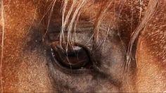 Horse Close Up!