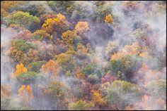 Fog Drifting Above an Autumn Forest, Shenandoah National Park, Virginia