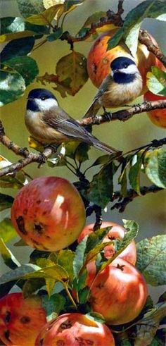 Autumn and Spring are my favorite times, when I feel the best. I love birds and…