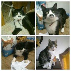 Os gatos da avo