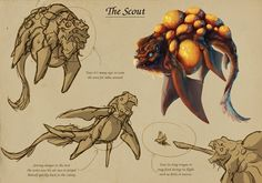 Bio-Diverse Colony - Scout by Tchukart on deviantART