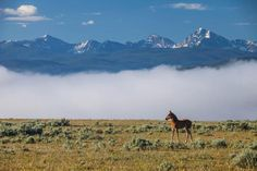 A foal on a spring morning at The Ranch at Rock Creek, Philipsburg, Montana. The Ranch has a herd of 75 horses.
