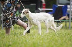 Smooches East Coast, Photography, Animals, Photograph, Animales, Animaux, Fotografie, Photoshoot, Animal