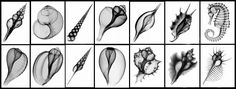 xray shells - Google Search