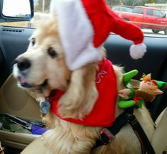 Tyson, out delivering Christmas Goodies!  Ho Ho Ho