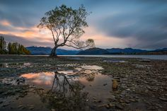 Wanaka - Holy Tree by Eddie Ang on 500px