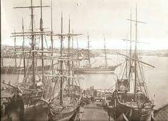 Darling Harbour 1871 Diving World, Botany Bay, Darling Harbour, Herzog, Tall Ships, Sydney Australia, Historical Photos, Sailing Ships, Boats