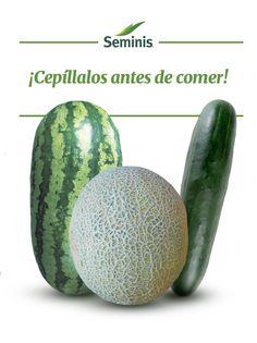Limpia tus #vegetales de cáscara gruesa. Lava con un cepillo las cáscaras de tus #pepinos, #melones y #sandías. #Seminis #Tip