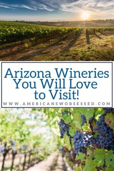 Feb 2020 - Did you know there are vineyards in Arizona? I couldn't believe you could have Arizona wine and then I had a chance to visit these Arizona Wineries and I have to say – going wine tasting in Arizona is one of my favorite things to do! Usa Travel Guide, Travel Usa, Travel Guides, Travel Tips, Beach Travel, Travel Abroad, Canada Travel, Travel Advice, Budget Travel