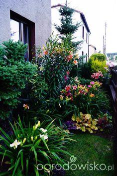 Wizytówka - Ogrodowe przygody - Forum ogrodnicze - Ogrodowisko