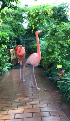 "The post ""Pink flamingo ?❤️"" appeared first on Pink Unicorn Animals Funny Birds, Cute Birds, Pretty Birds, Cute Funny Animals, Cute Baby Animals, Beautiful Birds, Animals Beautiful, Beautiful Pictures, Exotic Birds"