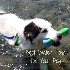 Summer Tips: Playing with Your Pooch, Games to Play to Reinforce Positive Behaviors Dog Information, Dog Games, Dog Beach, Water Toys, Dog Life, Dog Toys, Summer Fun, Best Dogs, Dogs And Puppies