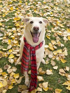 And don't forget a scarf to optimize your time in the autumnal beauty!