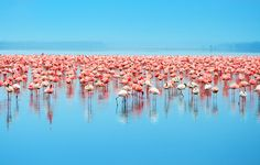 A guide to East Africa's Great Migration. get flamingos sculptures at https://maggie17.typeform.com/to/yoHegO