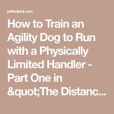 """How to Train an Agility Dog to Run with a Physically Limited Handler - Part One in """"The Distance Series"""""""