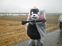 Kumamon in the rain!