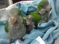 Pipi, Mia and Angustino