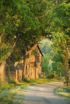 A country road in Summer with large trees overhanging it and a old barn in the background ~