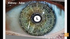WHY EVERYONE SHOULD GET THEIR EYES READ (iridology)