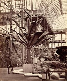 Tropical Plants in the Egyptian Room, Crystal Palace, 1854, Philip Henry Delamotte