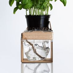 Self-Watering Herbs (Student Project) on Packaging of the World - Creative Package Design Gallery