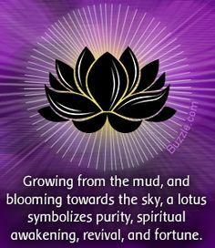 lotus flower symbolizes rebirth - Google Search