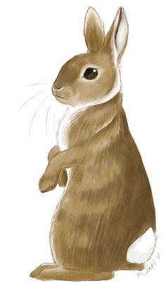 Rabbit by neon-possum on DeviantArt