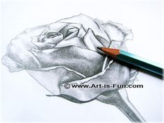Drawing supplies for how to draw a rose:  1.a regular HB pencil (HB stands for the hardness of the lead. Most pencils sold in stores for general writing purposes are HB.) 2.a kneaded rubber, which is a type of artist's eraser - but you can use any type of eraser 3.a pencil sharpener 4.a Q-tip (also known as a cotton bud) white paper (but you can use any color paper you want!) 5.a photo of a rose (you can also look at a real rose if you want)