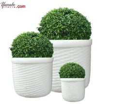 Buy Cream White Round Bab Cyl Planter (Set of , If you are looking for something unconventional, rustic yet elegant and aesthetic, the pretty bamboo cylinder planter pieces are worth the buy. Flower Planters, Hanging Planters, Flower Pots, Planter Pots, Ceiling Hanging, Buy Flowers, Cream White, Unique Home Decor, Artificial Flowers