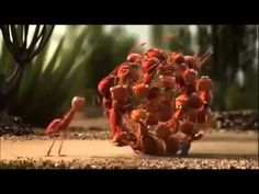 Beginning of the year: lesson on teamwork. Have the kiddos watch video and discuss what the animals were doing and how they used teamwork to reach their goal. This video was just too cute and would be a great hook for a collaboration lesson! Beginning Of The School Year, New School Year, Teamwork Funny, Teamwork Quotes, Whatsapp Videos, Leader In Me, Team Leader, Film D'animation, Classroom Management