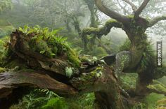The mystical wild woods of Dartmoor National Park, England (photographed by Duncan George)