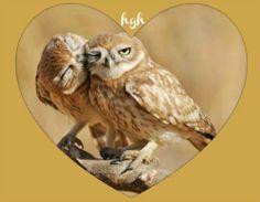 Image edit by me:  Hal Grey Hawk Brower :-)