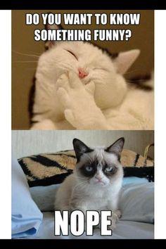 Grumpy cat is me