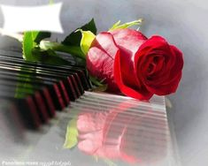 Une rose rouge + piano