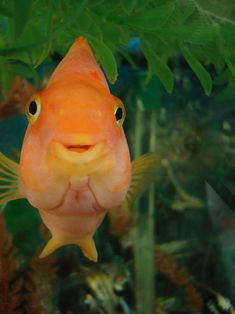 """And this fish smiling at you because everything will be okay! 