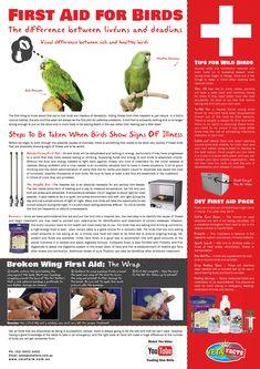 Training Your Pet Parrot Amazon Parrot, African Grey Parrot, Parrot Toys, Budgie Toys, Budgie Parakeet, Crazy Bird, Bird Food, First Aid, Pet Health