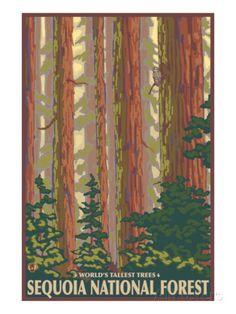 Sequoia National Forest, CA Redwood Trees Kunstdruck