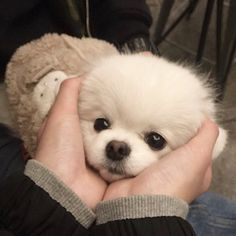 i wanna know the real thing about you dogs love animals pets Cute Puppies, Cute Dogs, Dogs And Puppies, Cute Babies, Doggies, Cute Baby Animals, Animals And Pets, Funny Animals, Cute Creatures
