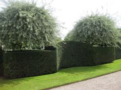 Image result for castellated formal hedge