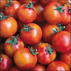 Isis Candy heirloom tomatoes