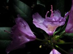 flowers - my life as an insect.  (on picasa/google)