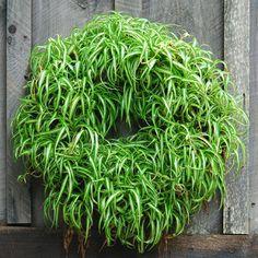 spider.wreath