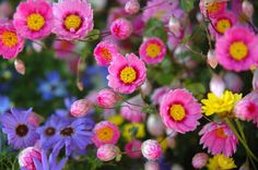 Wildflowers | Wildflowers, a photo from Western Australia, West | TrekEarth