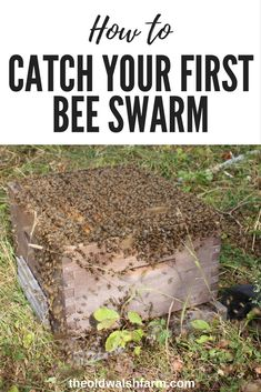What do you do when your bees try to run away from home? You catch them – even when you have no idea what you are doing. Here's how you catch a bee swarm. Honey Bee Hives, Honey Bees, Honey Bee Swarm, Bee Facts, Bee Hive Plans, Beekeeping For Beginners, Raising Bees, Bee Boxes, Bee Hives Boxes