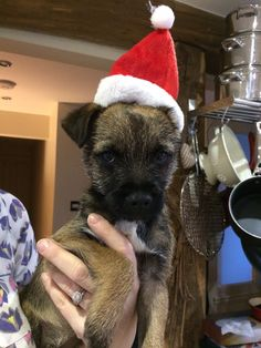 Not sure about my Xmas hat