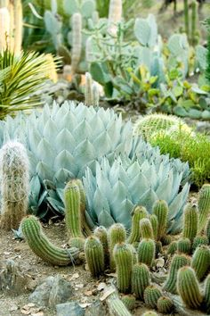 The more I know about the meaning of mindfulness, the more I love a cactus garden.