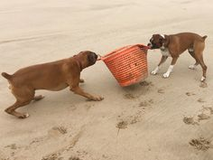 These guys love playing with new things found on the beach > sometimes I can't get them to leave and come home!