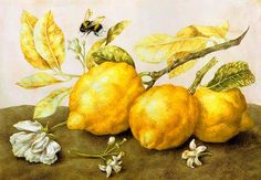 Still Life with Lemons and a Bee, Giovanna Garzoni, ❤Art※Oil❤ Botanical Illustration, Botanical Art, Botanical Drawings, Merian, Fruit Painting, Painting Art, Tile Murals, Italian Painters, Needlepoint Kits
