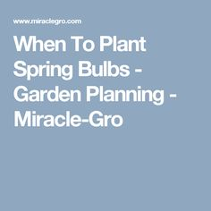 When To Plant Spring Bulbs - Garden Planning - Miracle-Gro